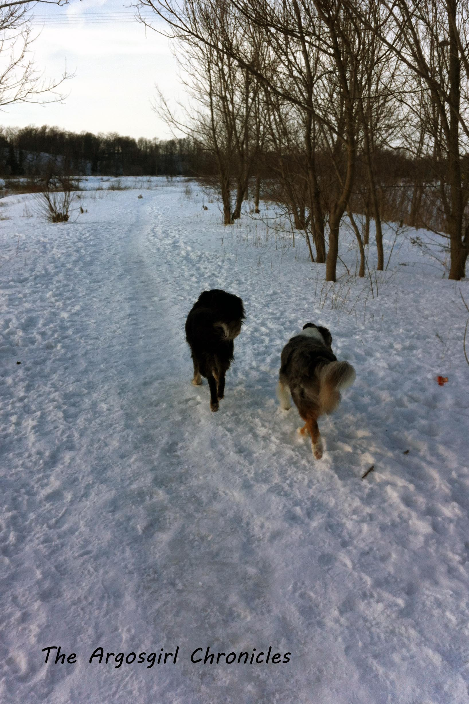 Best buds enjoying the trail (one of the few moments when Molly was on the trail).